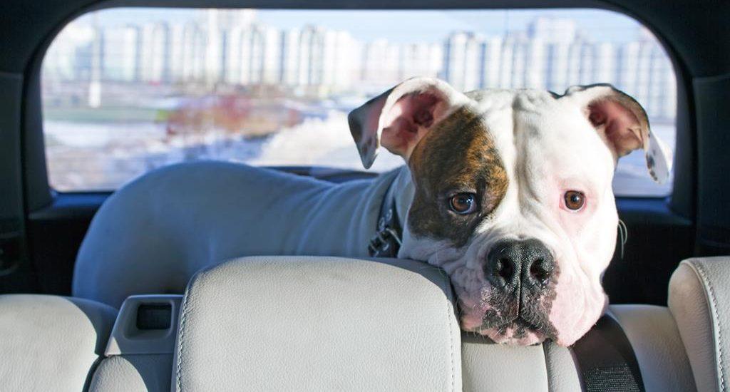 Viajes en vehículo con animales