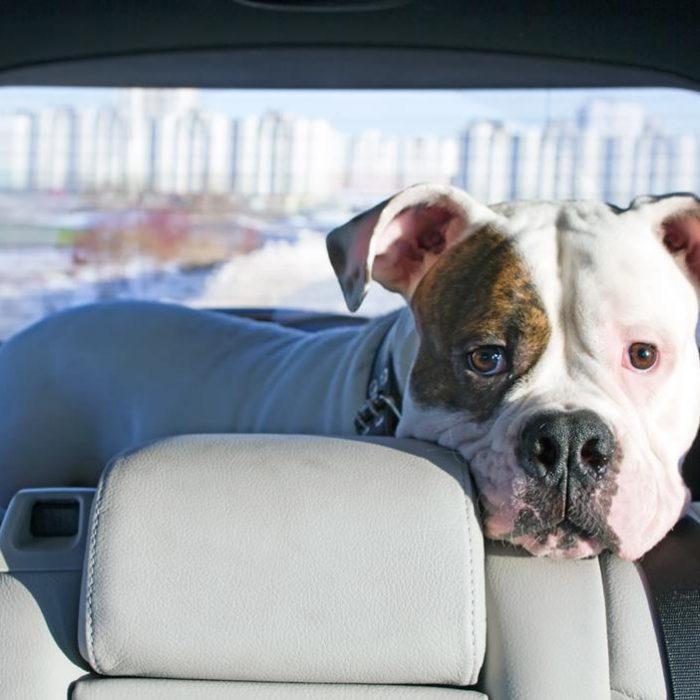 Автомобильное путешествие с животными