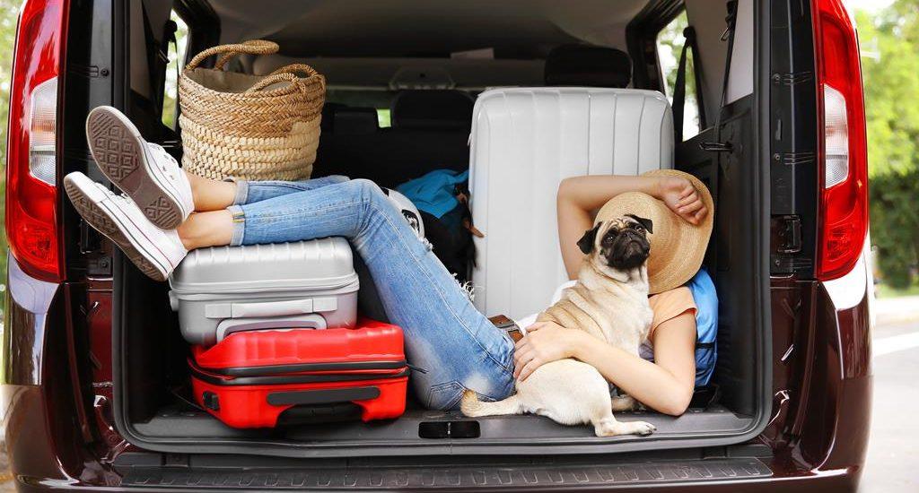 Tener un perro en un vehículo