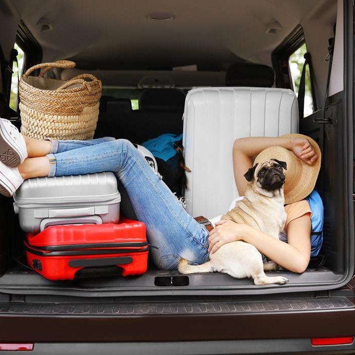 Собака в автомобиле