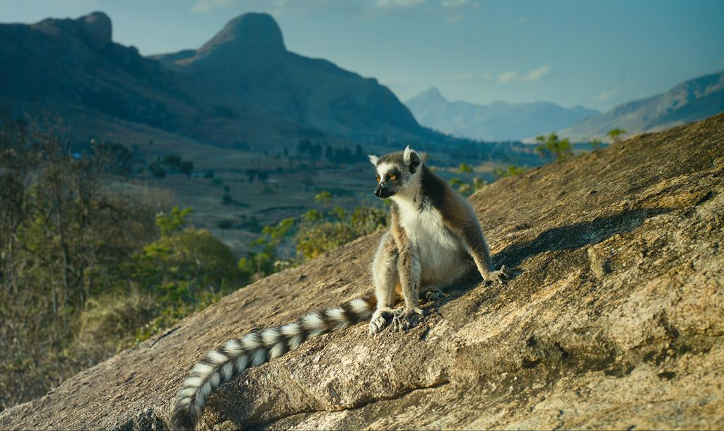Driving tips for Madagascar - International Driving Authority